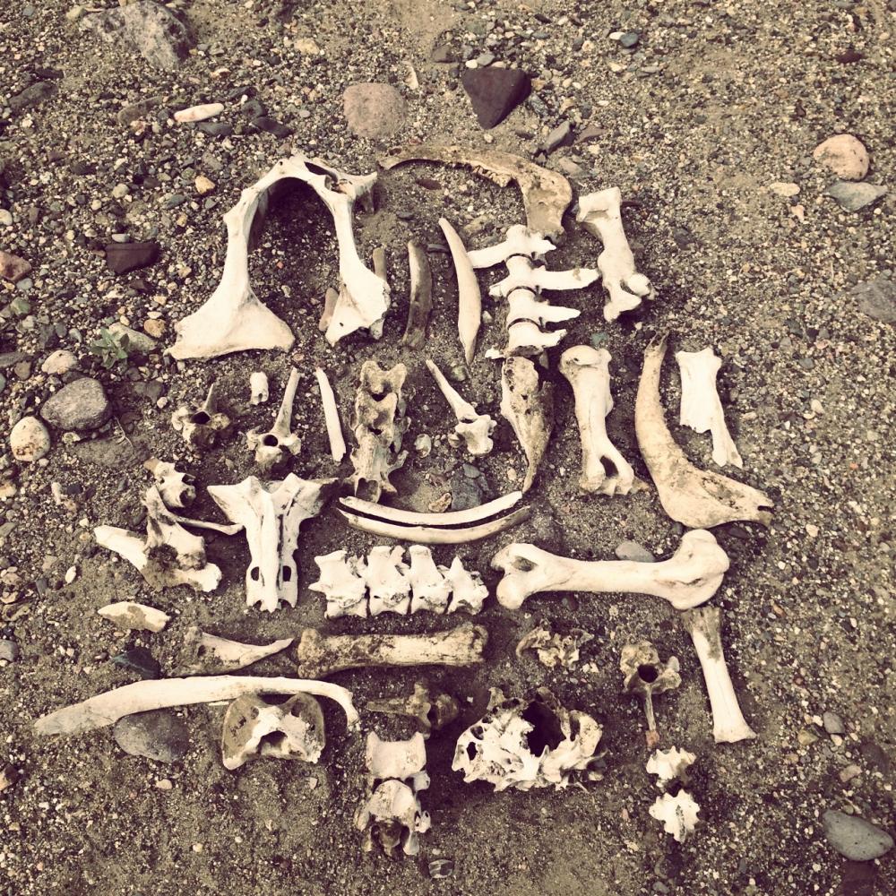 bones_Fotor